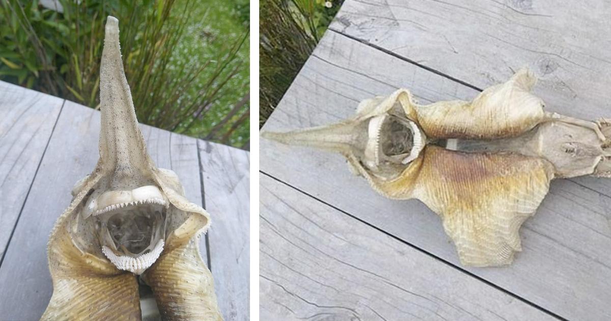 Сотня зубов и крылья: в Новой Зеландии нашли скелет странного существа