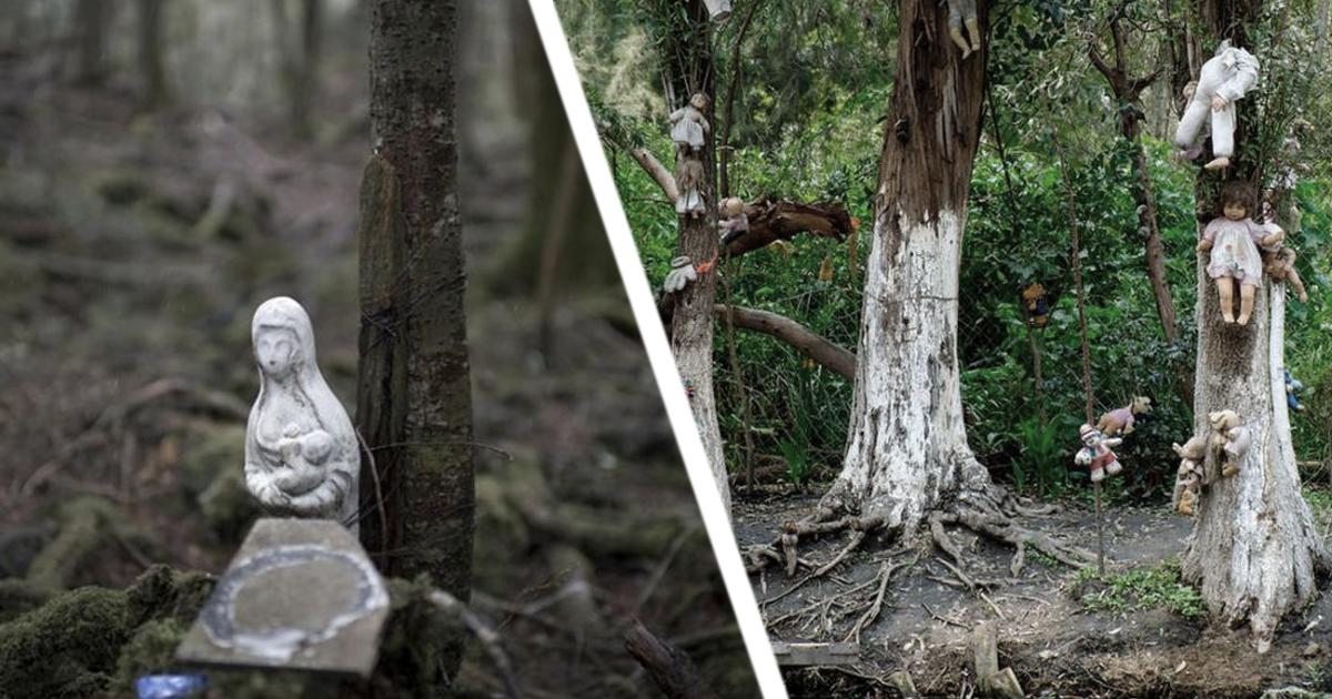Фото Тайны Аокигахара: лес самоубийц в развивающейся Японии