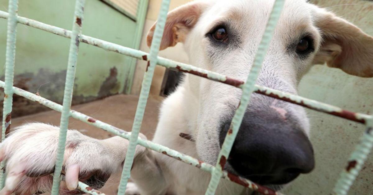 Фото Путин подписал закон о защите животных. Что изменится и в чем проблемы?
