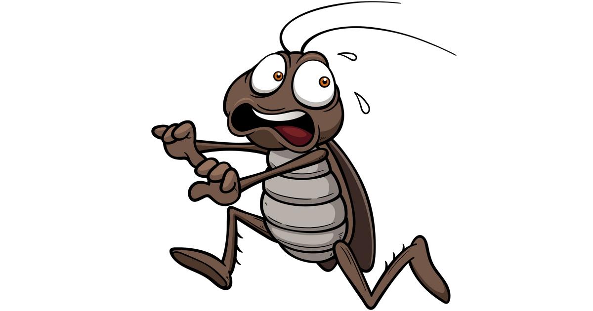 Куда подевались тараканы? И когда они вернутся? Отвечают специалисты