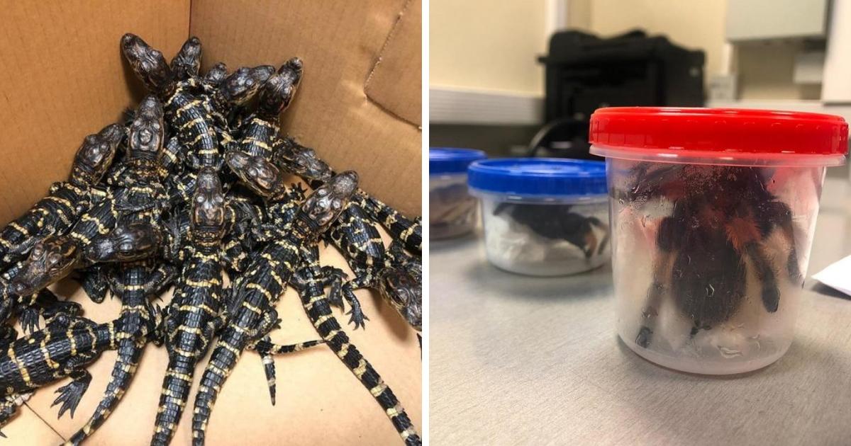 Террариум в подарок: мужчина пытался ввезти в Россию рептилий из Мексики