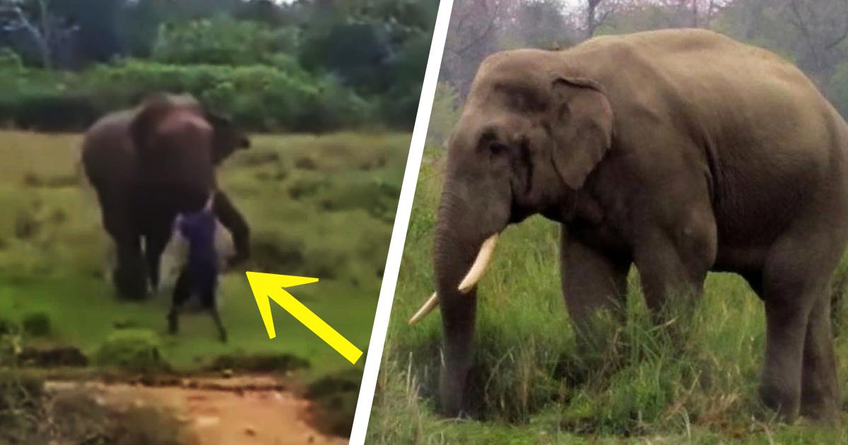 Фото Слон из Шри-Ланки насмерть затоптал посетителя парка