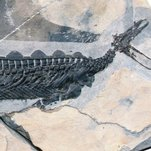 Trilobites: And You Thought the Platypus Was Odd