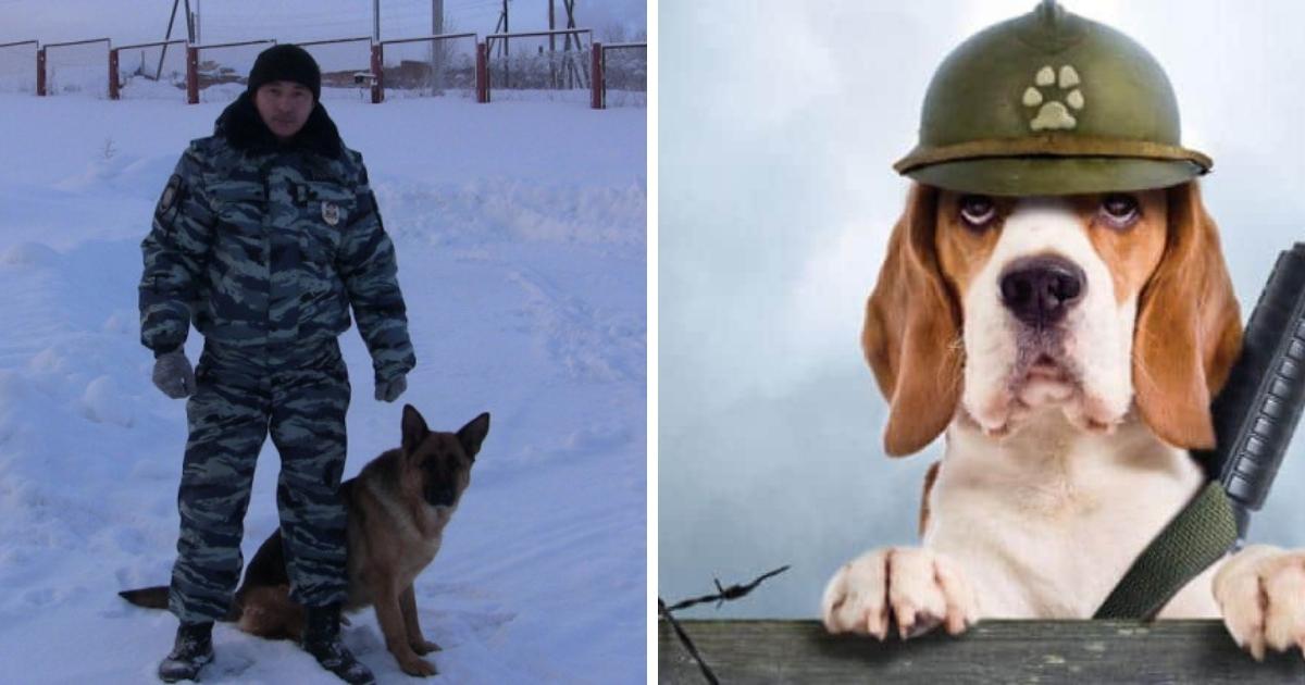 Служебная собака спасла жизнь грабителю из Коми