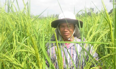 Photo of The miracle method for sustainable rice – and bigger harvests  | John Vidal