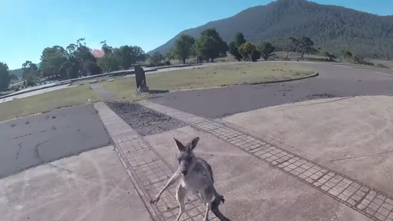 Photo of Paraglider lands, immediately gets attacked by kangaroo