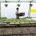 Local Food in Puerto Rico Finds Energy in Recovery