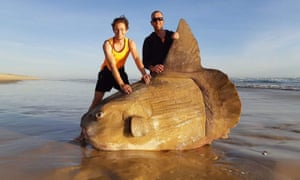 Giant sunfish washes up on Australian beach: 'I thought it was a shipwreck'