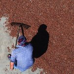 Syrian Refugees Toil on Turkey's Hazelnut Farms With Little to Show for It
