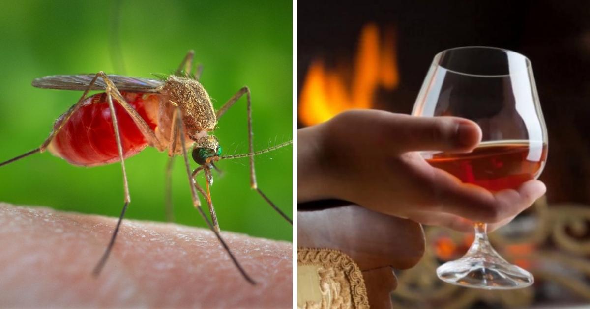 Испытывают ли удовольствие комары, когда пьют кровь пьяного человека?