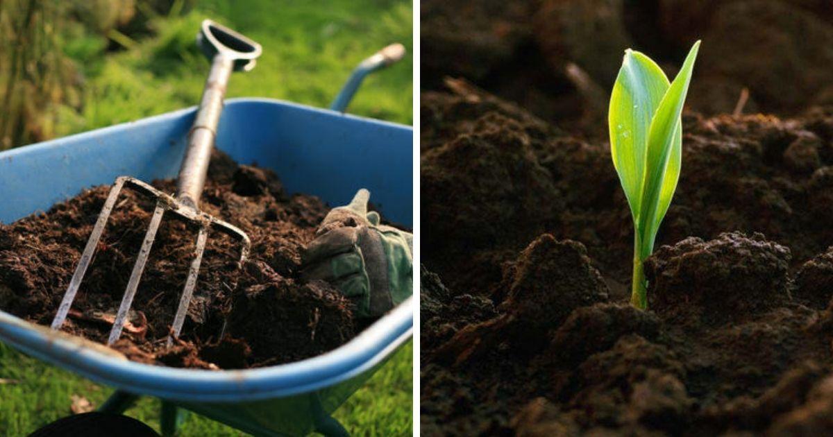 Вместо кремации. В США разрешили превращать людские останки в компост