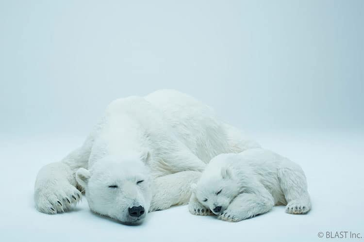 Photo of You Can Live with These Life-Sized Polar Bear and Cub Sculptures That Feel Like the Real Thing