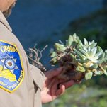 Poachers Stockpile 'Tiny and Cute' Succulents Worth $600,000, Investigators Say