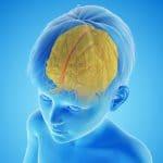 Photo of Childhood Adversity Linked to Premature Brain Development and Mental Illness