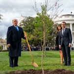 Oak Tree Given to Trump by French President Has Died, Official Says