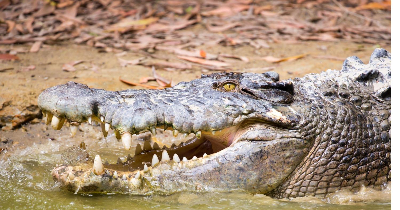 Око за око. Крокодил-людоед пал от рук жителей деревни