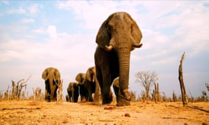 Lift 'unfair' ban on ivory trade, southern African leaders urge summit