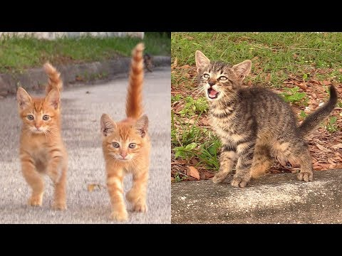 Photo of Three Adorable Kitten Cry For Help, Luckily 'Cat Man Chris' Was There To Help