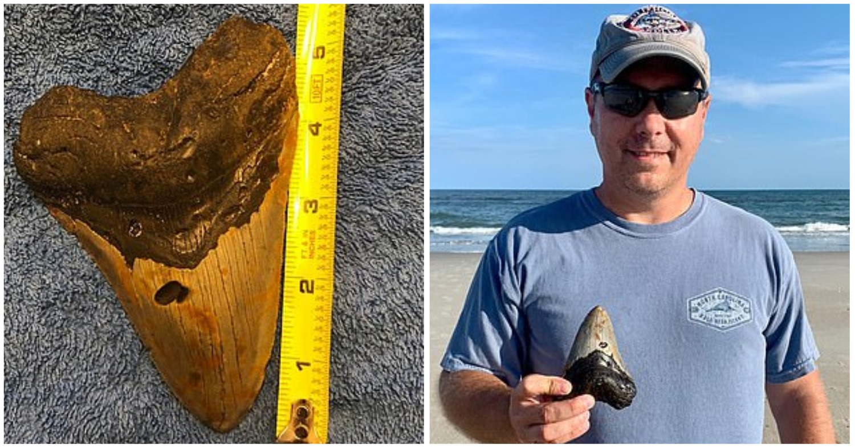 Случайная находка. Мужчина подобрал зуб древней акулы