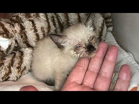Photo of Sweet Little Stray Who Was Malnourished With An Eye Infection Has An Amazing Transformation
