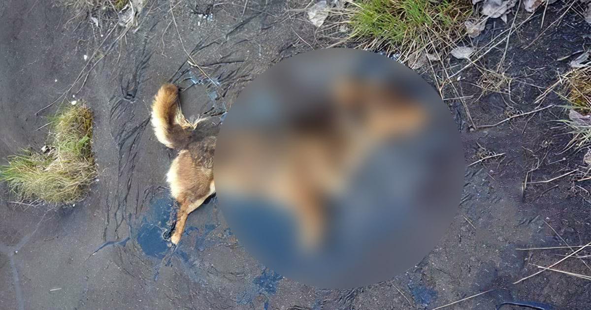 Фото Спасли животное из плена. Собака пролежала в смоле несколько дней
