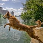 Photo of Algae Can Poison Your Dog