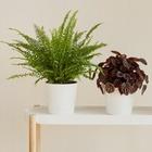7 комнатных растений для тех, у кого окна выходят на север