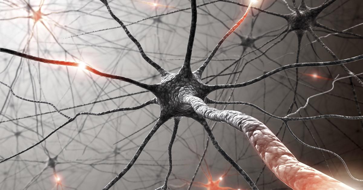 Шванновские клетки. Обнаружен новый орган боли