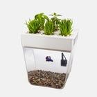 Цифровой сад: 5 гаджетов для домашних растений
