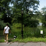 Photo of Algae That Can Kill Dogs Is Discovered in 3 N.Y.C. Parks
