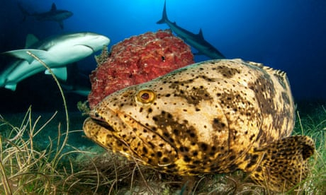 Photo of Cuba drastically reforms fishing laws to protect coral reef, sharks and rays