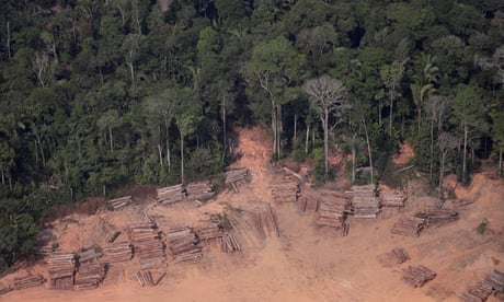 Photo of Brazilian Amazon deforestation surges to break August records