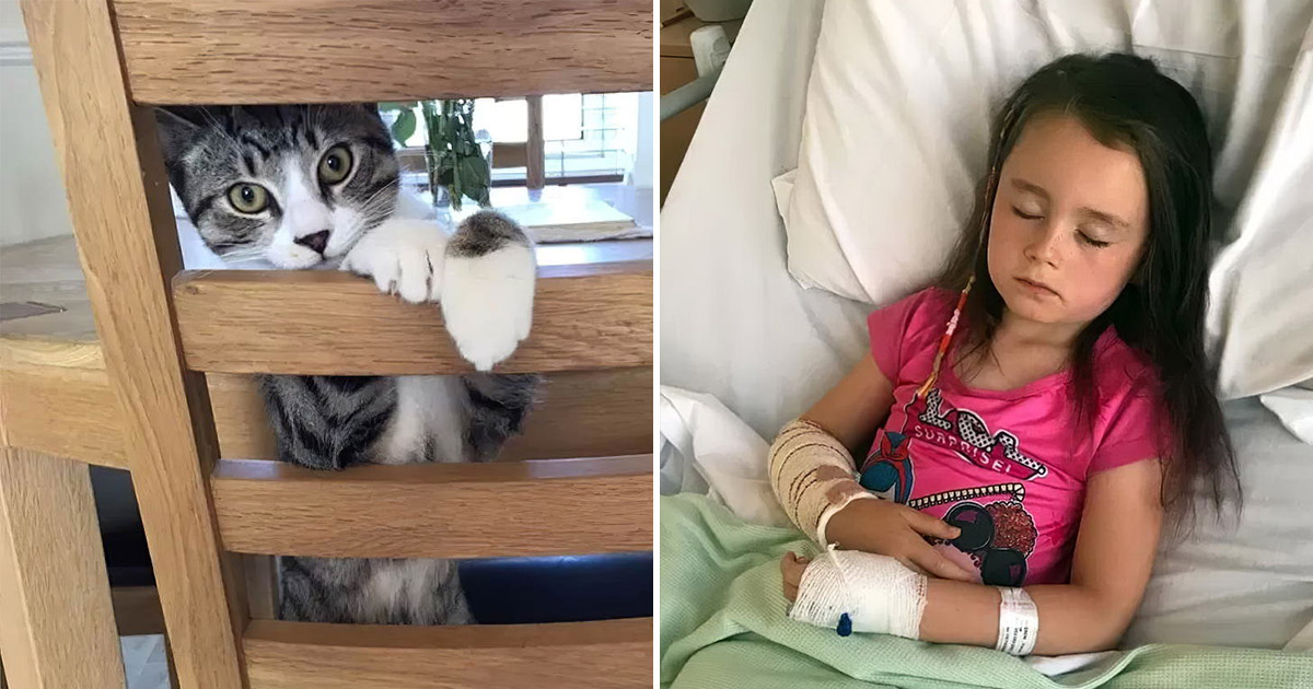 Кот чуть не погубил хозяйку. Шестилетняя девочка едва пережила укус питомца
