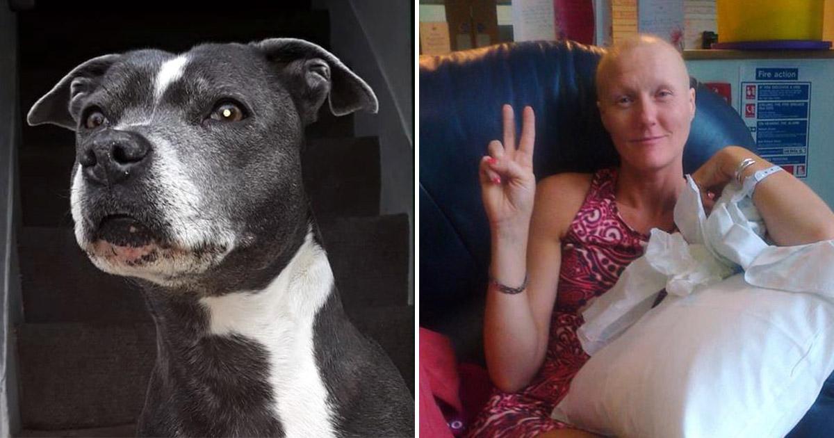 Собака спасла жизнь хозяйке, учуяв рак молочной железы