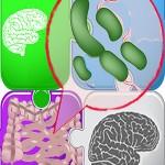 Mouse Study: How Serotonin, Antidepressants Affect Gut Bacteria