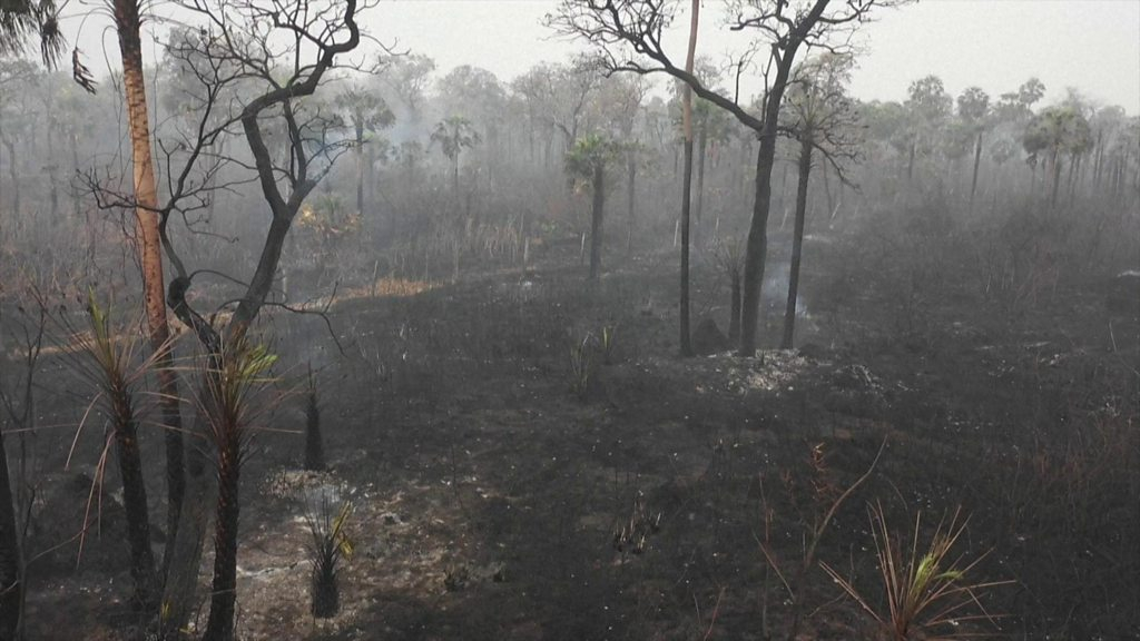 Photo of Bolivian wildfires destroy two million hectares of forest