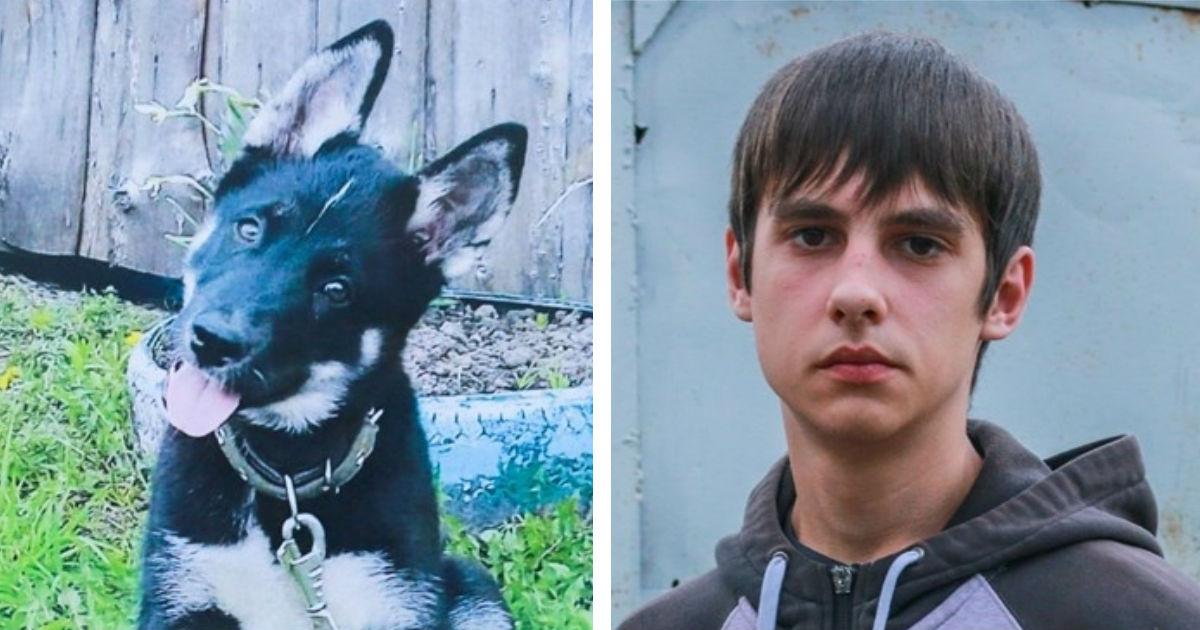 Фото В Томске спасают от сyдa школьника: стукнул по машине, сбившей его щенка