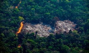 World losing area of forest the size of the UK each year, report finds