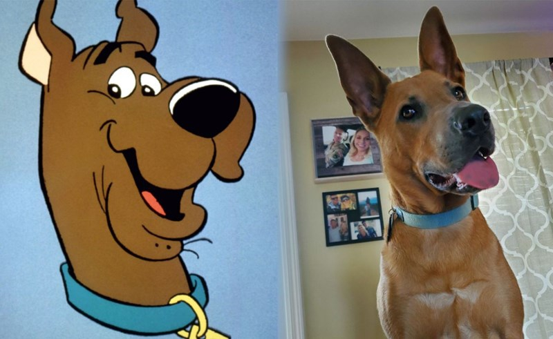 Photo of Celebrating Scooby-Doo's 50th Anniversary With Scooby-Doo Look-A-Likes