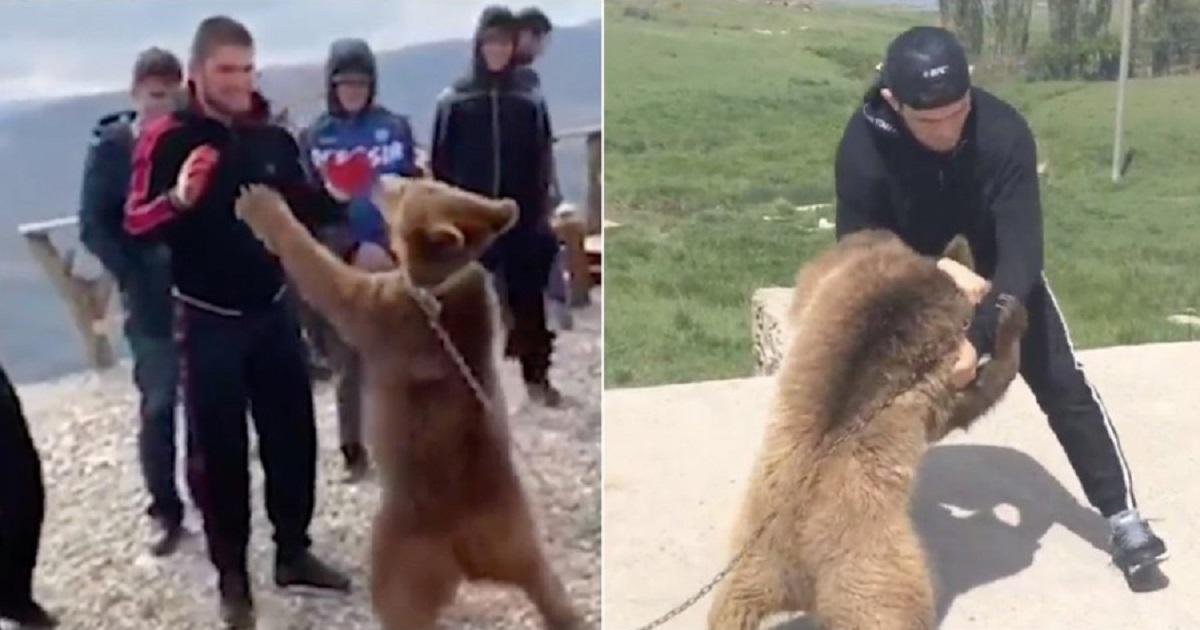 На Хабиба пожаловались в UFC: дрался с медведем на цепи