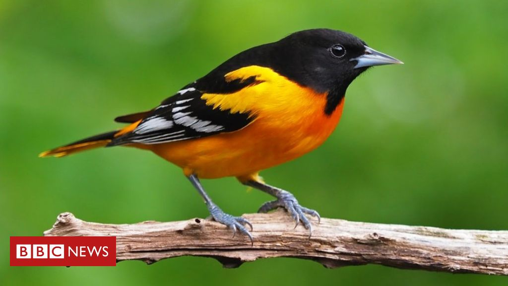 Photo of US and Canada lose 3bn birds in 50 years