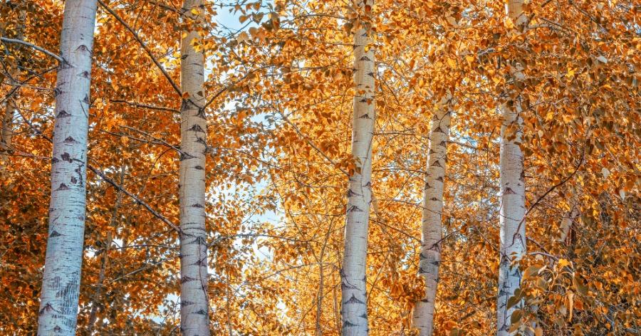 Фото День осеннего равноденствия в 2019 году: народные приметы и ритуалы