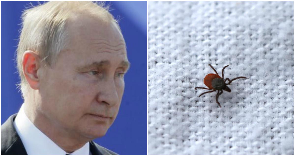 Жителя Орла оштрафовали за оскорбление Путина в новости про клещей