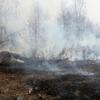 Волокита названа одной из причин распространения лесных пожаров в Сибири