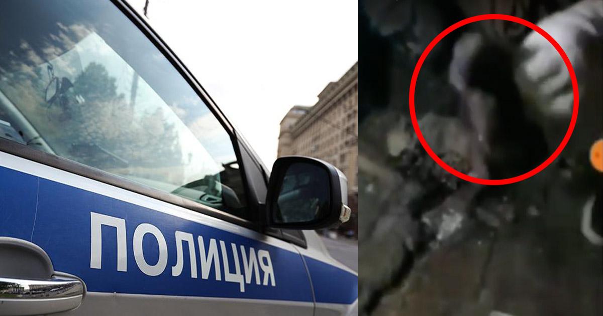 В Башкирии школьники с помощью петард расправились с собачьей семьей