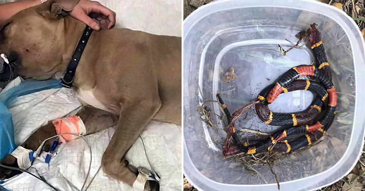 Лучший друг человека. Собака спасла детей ценой своей жизни