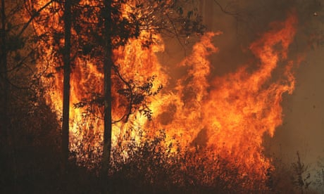 Photo of Bushfire that razed homes in NSW town Rappville may have been deliberately lit