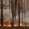 Лесные пожары в Сибири не думают прекращаться