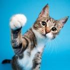 Сбежал кот, которого подозревают в помощи наркоторговцам