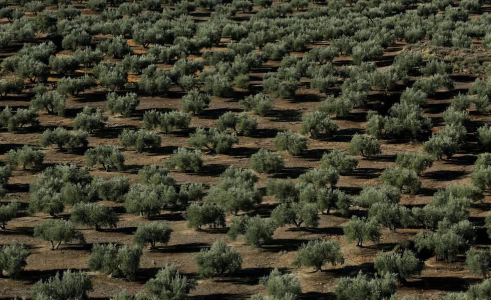 Photo of Las ventas del campo español a EE UU caerán al menos un 12% por los nuevos aranceles